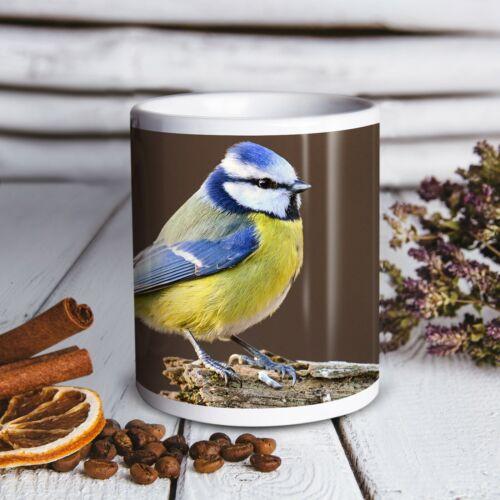 Belle Blue Tit BIRD-Boissons Tasse Cuisine Anniversaire Bureau Amusant Cadeau #15773