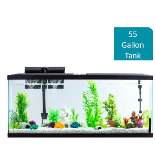 Fish Tank Kit 55-Gallon Aquarium With LED Lighting Placed On Table Bookshelf