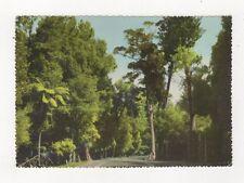 The Wishing Tree Lake Rotoiti New Zealand Postcard 931a
