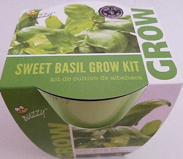BUZZY Daisy Grow Kit Fresh Flowers & Indoor Plants Fresh Cut ...