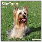 Silky Terrier Calendar 2017 by Avonside Publishing Ltd. (Paperback, 2016)