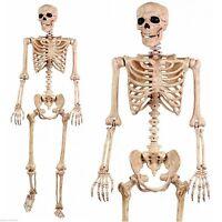 5' Pose N Stay Life Size Skeleton - Halloween Decoration