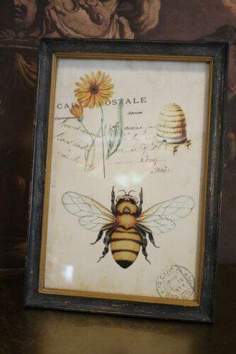 Vintage Bild Antiklook mit Biene von Meander Nostalgie Botanisch 23cm x 38cm