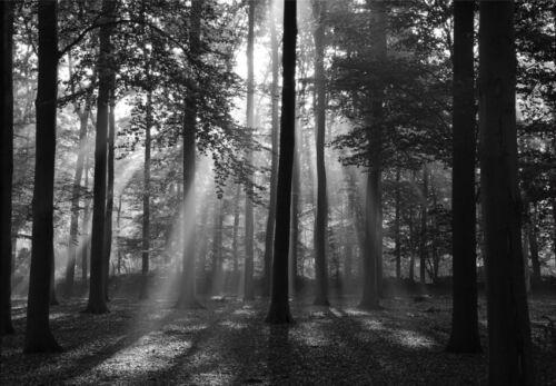 Papier peint-clairière 06p 350x260cm-7 passes-Atomes-digital pression-forêt