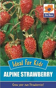 5e438cd1a Image is loading Fruit-Kids-Alpine-Strawberry-Seeds