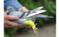 Prothese Für Tauben - Brieftauben- Rassetauben Taube-vogel- Vögel -geflügel
