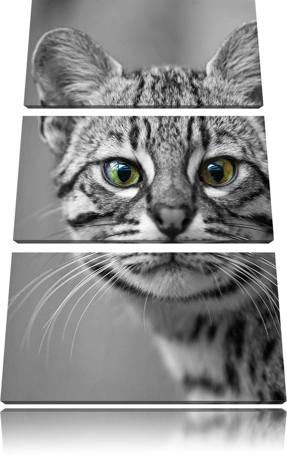 Pequeñas Gato de de de Bengala Negro Blanco 3-Teiler Foto en Lienzo Decoración Pa rojo  0fa2f4