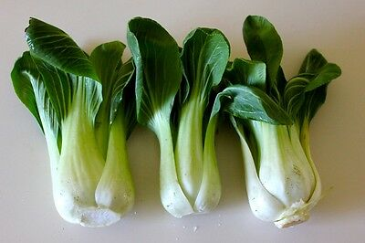 TOY CHOY * MINI BABY CHOI * TENDER * STIR FRY * EXCEL FLAVOR * WELL IN HOT TEMPS