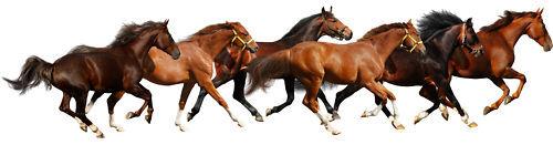 Aufkleber Tiere Pferde Ref 502