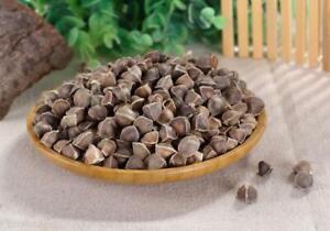 1 LB Chinese Herbal Moringa tree seeds 辣木籽 La Mu Zi Moringa oleifera Lam tea