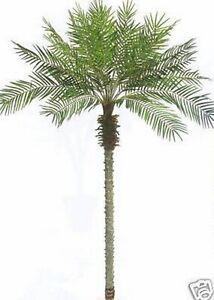 Image Is Loading 8 039 Artificial Phoenix Palm Tree Plant Bush