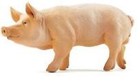 Papo Wild Boar Pig Animal Toy Figure Animal Pretend Play 51044