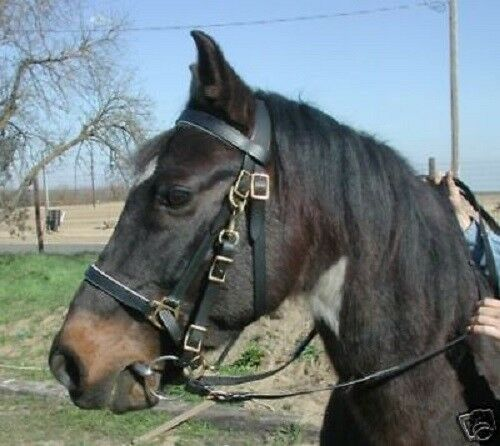 Black horse size leather Australian halter bridle with nice reins