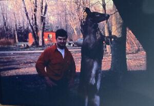 Vintage-Photo-Slide-1986-Deer-Hunting-New-York-Graphic-Hunter