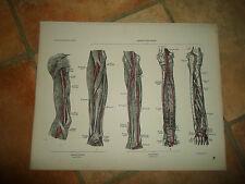 ARTERIES+VEINS+LYMPHATICS #62 Old Print From Descriptive Atlas of Anatomy 1880