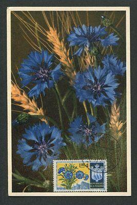 D8013 Harmonische Farben Briefmarken Radient San Marino Mk 1953 Flora Kornblume Maximumkarte Maximum Card Mc Cm Fdc ! Briefmarken