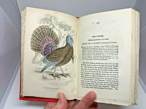 Jardine-29-Hand-Colored-Plates-Engraved-1888-Gallinaceous-Fowl-Birds