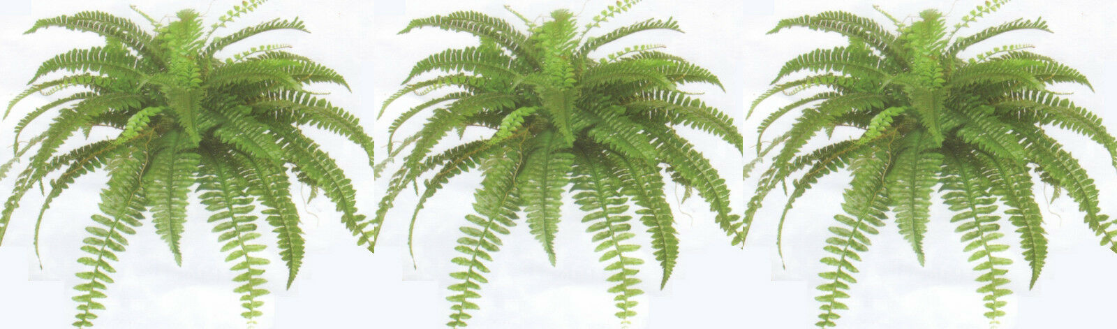 3 BOSTON FERN 38  SPREAD X 48 SILK LEAF BUSH PLANT ARTIFICIAL ARRANGEMENT PORCH