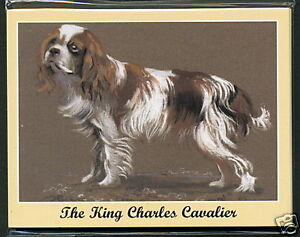 KING CHARLES CAVALIER SPANIEL - Man's Best Friend Dog Breed Collectors Card Set