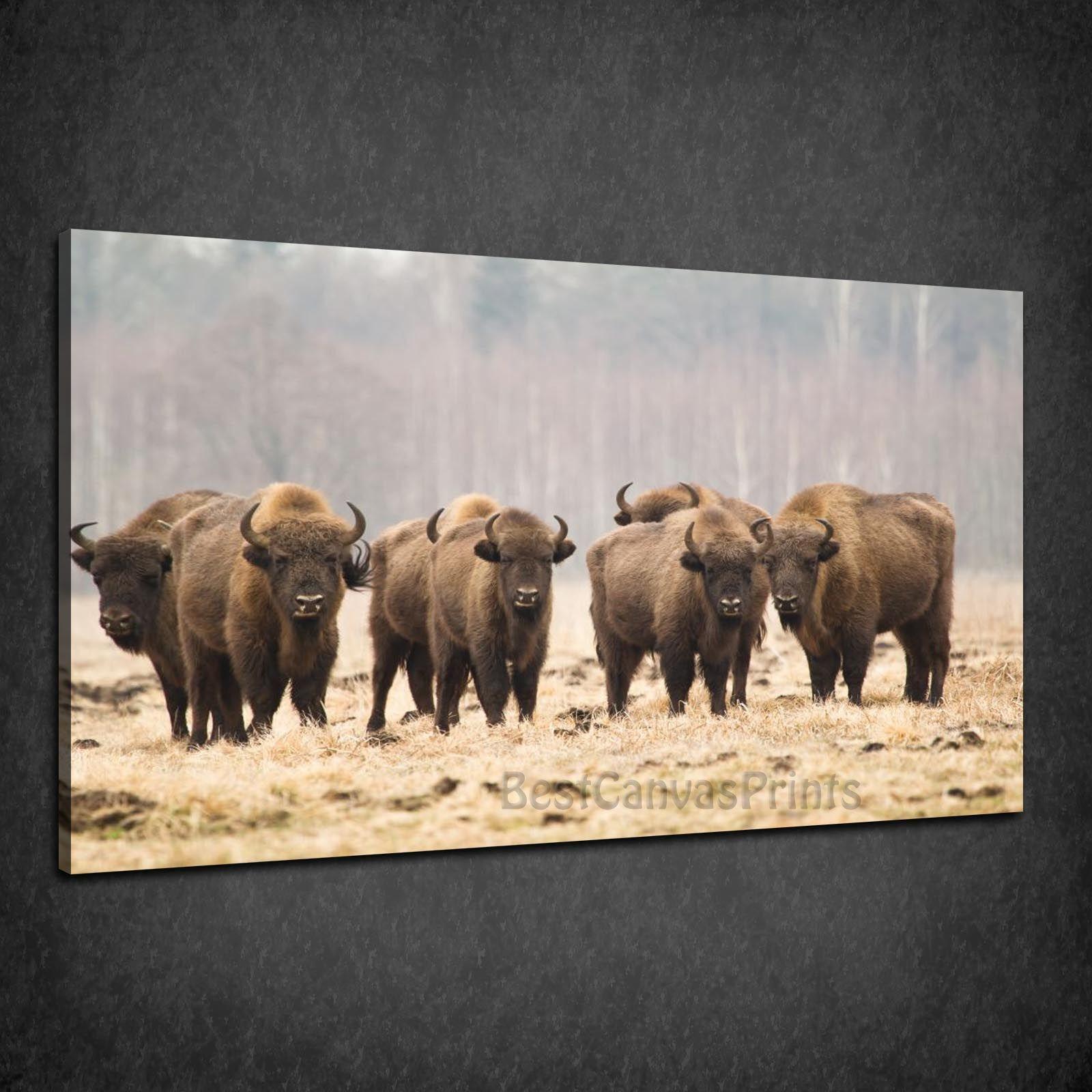 BISONS HERD ANIMALS MODERN DESIGN BOX CANVAS PRINT WALL ART PICTURE