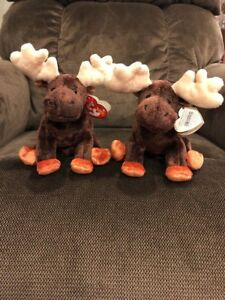 Ty Beanie babies  Zeus The Moose with TAG ERRORS