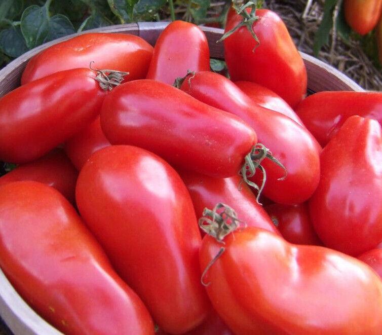 Tomato 'SAN MARZANO' 15+ Seeds Certified Organically Grown Seed