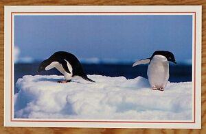 National-Geographic-Postcard-Adelie-penguins-contemplate-frigid-Antarctic-water