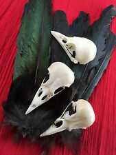 magpie skull taxidermy biology art film feathers goth hats jewellery altar