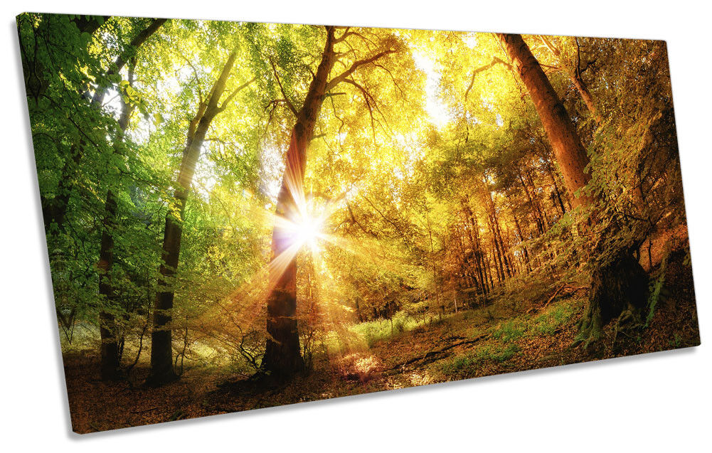 Forest Sunset Landscape Picture PANORAMIC CANVAS WALL ART Print