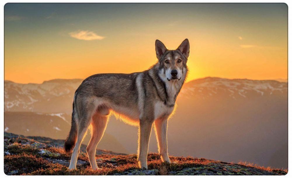 Wolf Berge Dämmerung Wandtattoo Wandsticker Wandaufkleber R0033