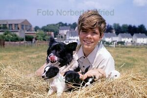 Heintje-Hein-Dogs-Puppies-Photo-7-7-8x11-13-16in-Without-Autograph-Nr-2-66