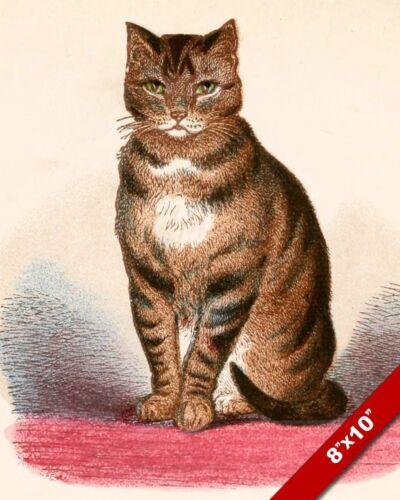BROWN STRIPE TABBY CAT KITTEN PET ANIMAL PORTRAIT ART PAINTING REAL CANVAS PRINT
