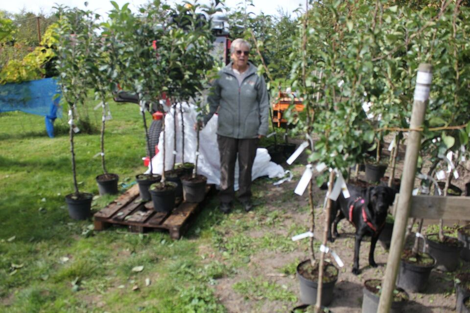 Familie frugt træer med 3 sorter frugter