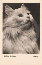 """RPPC of WHITE KITTEN """"Favorite of the House"""" CAT Postcard REAL PHOTO Photograph"""