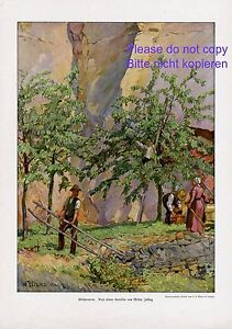 Kirschenernte XL Kunstdruck 1914 Walter Zeisig Kirsche Leiter Kirschbaum