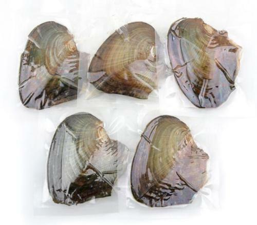 New Akoya Pearl Oysters With Real Pearl 7-8mm Freshwater Pearl Vacuum Packaging