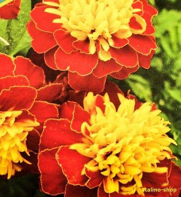 Tagetes *Tigerauge* 50 Samen *Чорнобривці *Kompakter Busch *Duftend Blumensamen