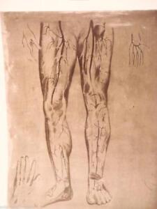 sheet-matrix-zinc-lithographs-body-human-modello-anatomico-2-skull-vintage