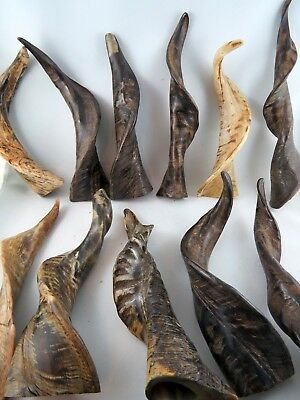 Unit or Pair Taxidermy REAL Natural Polished Goat Horn