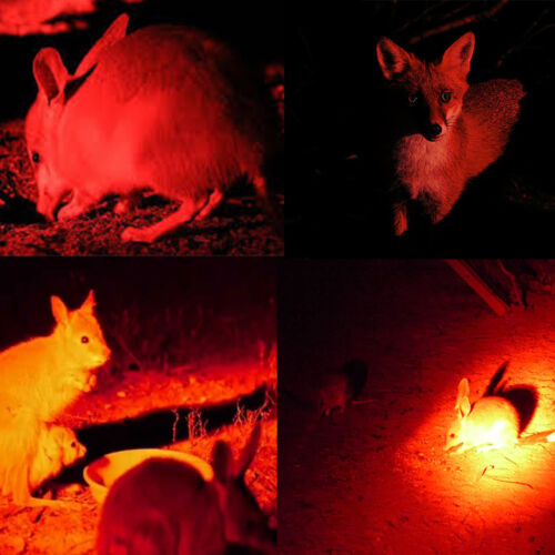 350Yards 8000LM Green//Red//White Predator LED Flashlight Rial Rifle Mount+Charger