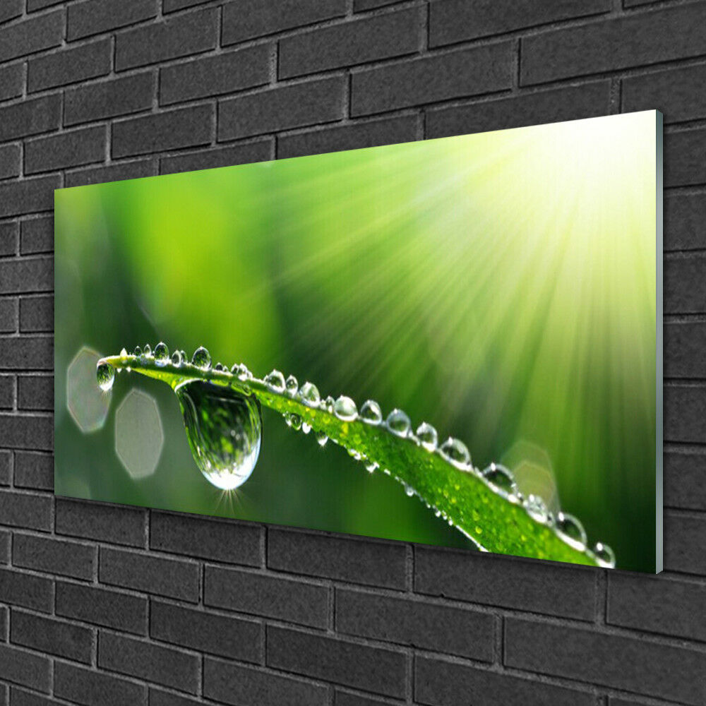Glass print Wall art 100x50 Image Picture Grass Dew Drops Floral