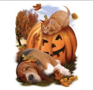 Halloween-Shirt-Cat-amp-Dog-Jack-O-039-Lantern-Fall-Colors-Small-5X
