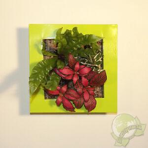 Détails sur Cadre végétal Be Green Vert Anis 19x19cm avec Mix 3 Plantes  (tableau végétalisé)