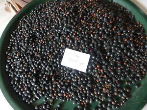 lot-au-poids-900g-de-perle-en-bois-tres-anciennes-rondes-ovales-noir-marron