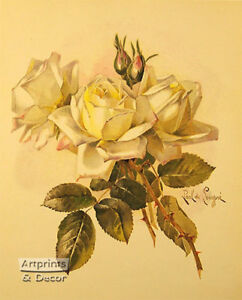 Roses by Paul de Longpre Art Print of Vintage Art