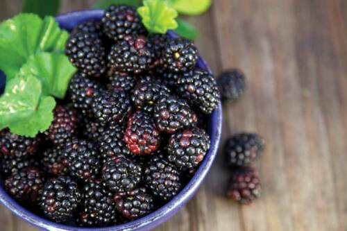 50 Pcs Colorful Raspberry Berry Seeds Ordinary 4 Colors Tasty Kitchen-Garden