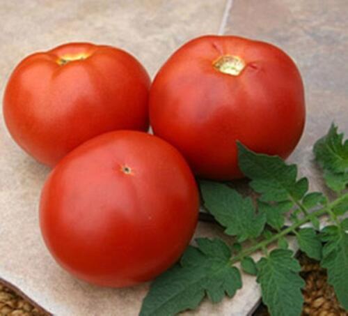 BHN-602 PL Tomato Seed