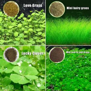 Plant-Seed-Fish-Tank-Aquarium-Aquatic-Water-Grass-Decor-Garden-Foreground-PlantS