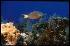 164044 Luce Spot Parrotfish A4 FOTO STAMPA
