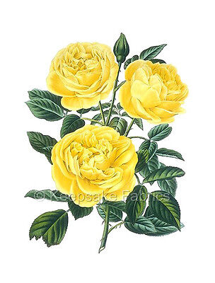 Victorian Three Yellow Roses Quilt Block Multi Size FrEE ShiPPinG WoRld WiDE